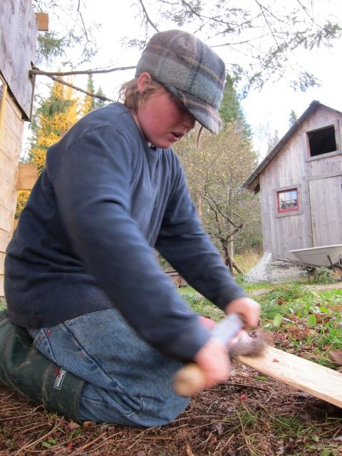 Fleshing a muskrat hide