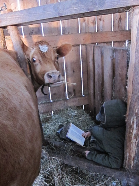 Fin reading while Penny milks