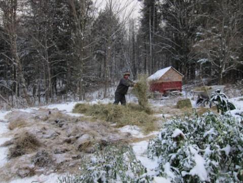 Last minute mulching. Photo by Rye